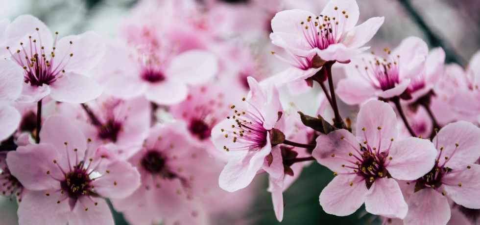 fiori-flower-primavera-2021-spring-pink-rosa