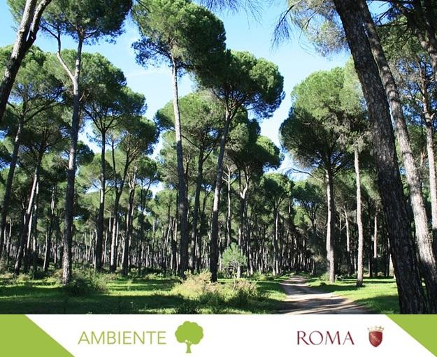 alberi-verde-cielo-prato-trees