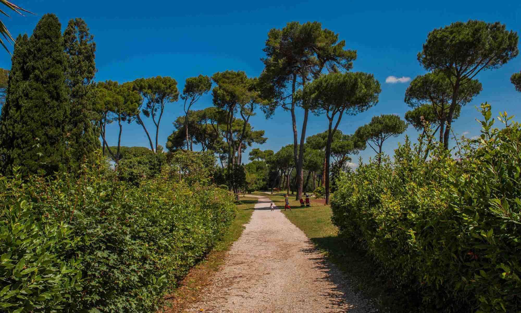 verde-alberi-viale-cespugli-cielo