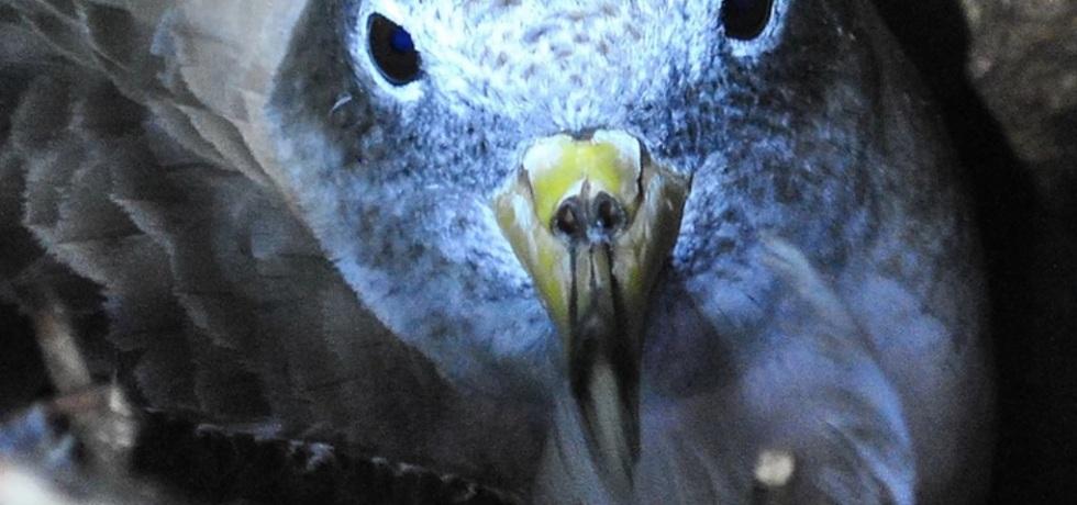 uccello-bird-becco
