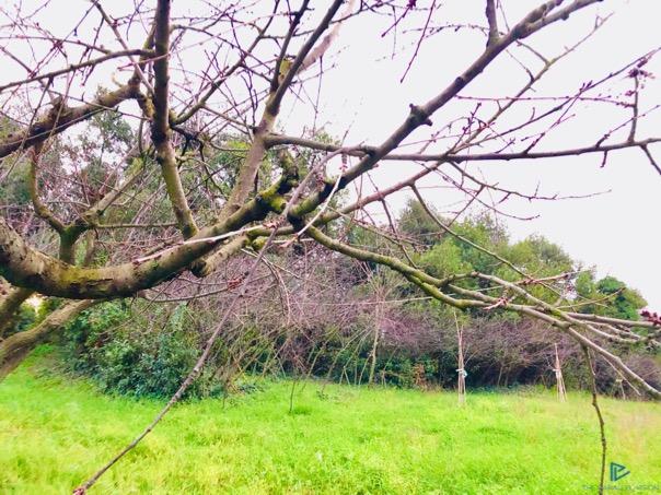 albero-verde-green-rami