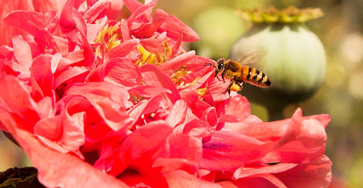 api-fiori
