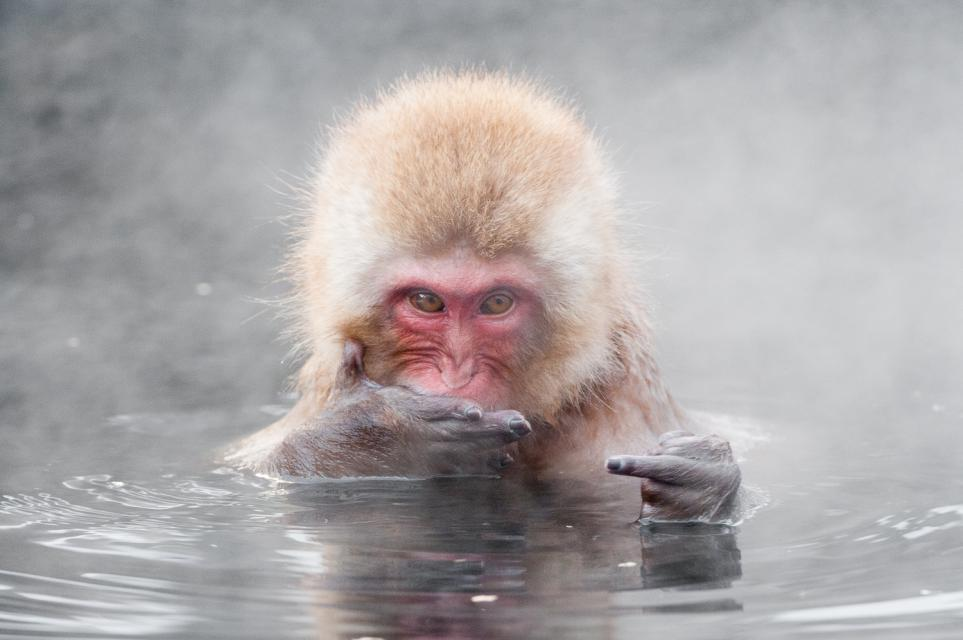 scimmia-acqua-vapore