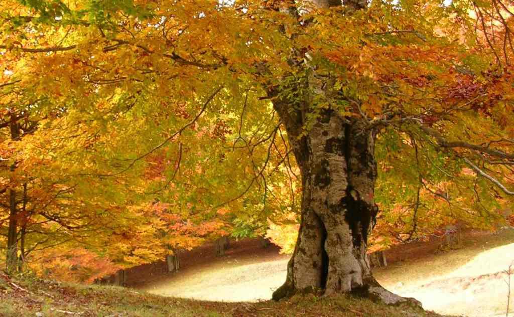 albero-foglie-parco