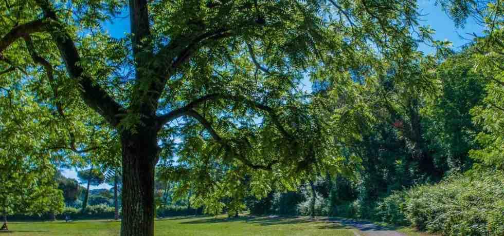 alberi-prato-verde