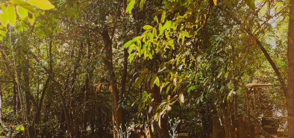 verde-green-alberi-foglie-piante