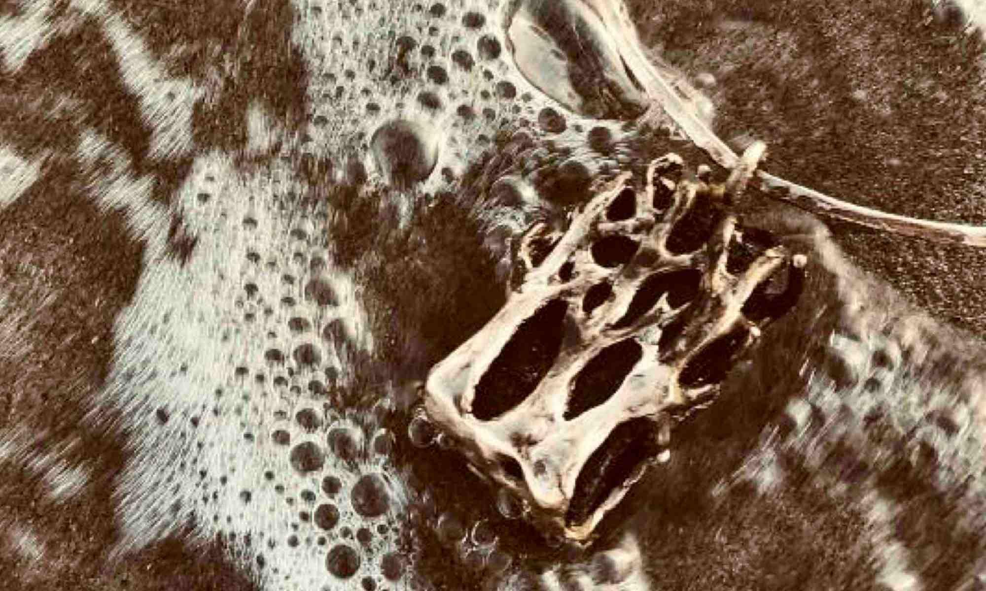 gioiello-schiuma-mare