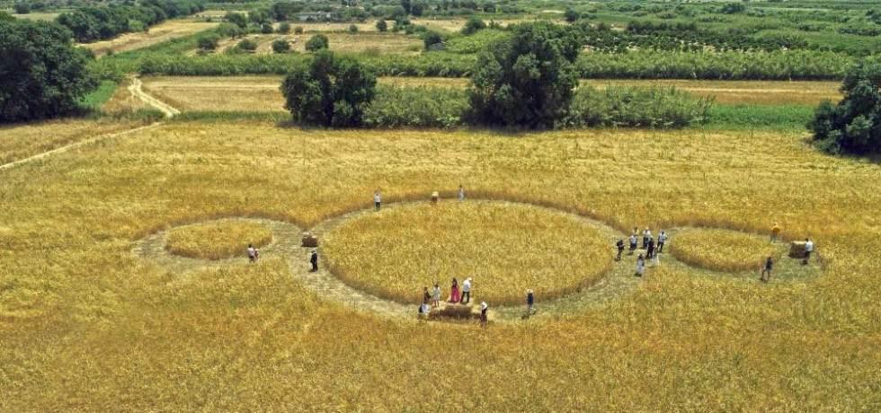 grano-campi-cerchi-alberi-persone