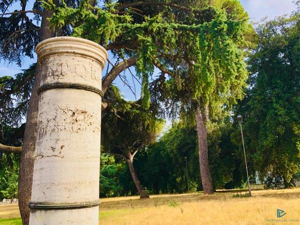 alberi-colonna-prato