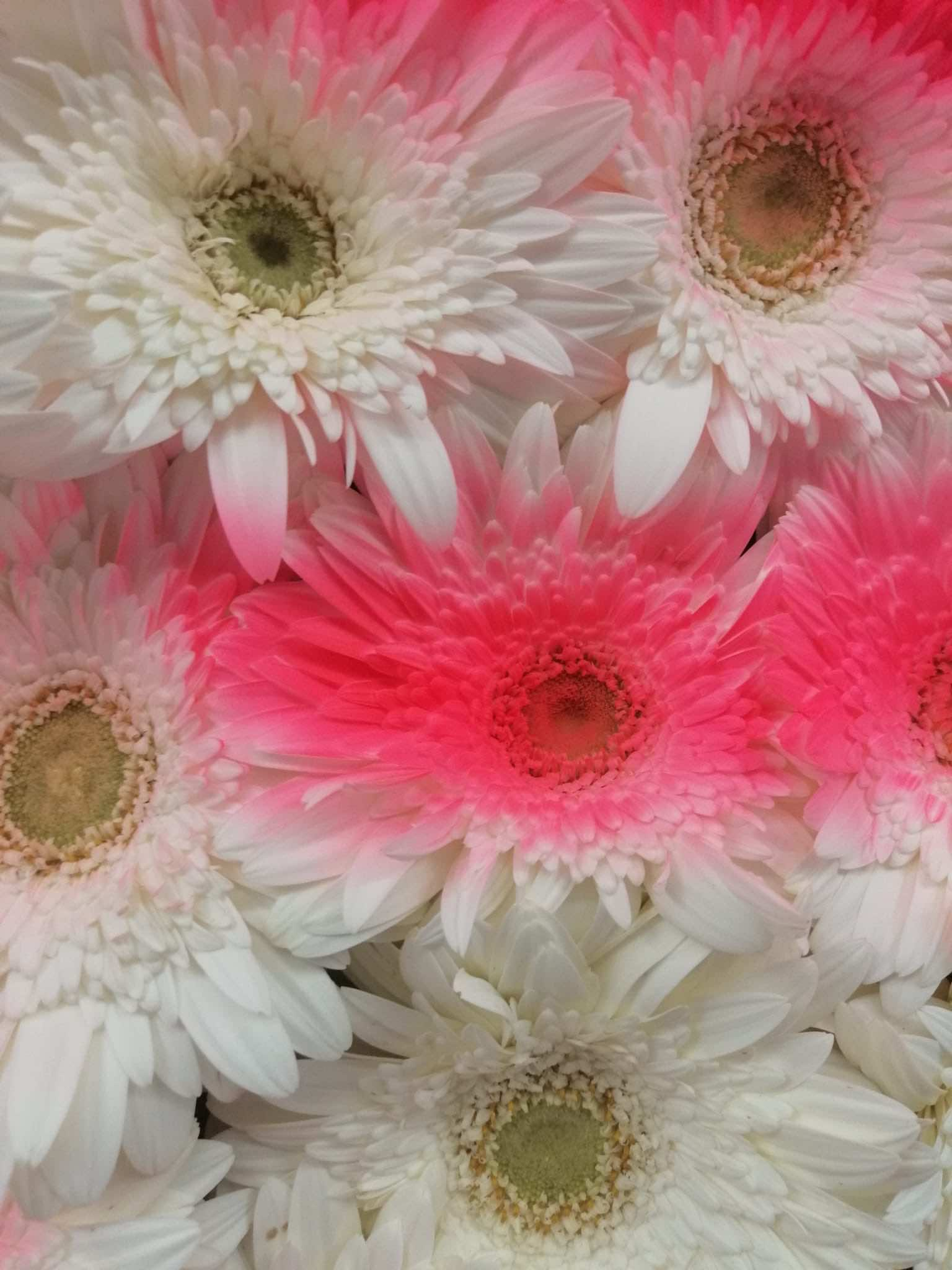 fiori-petali